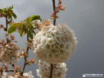 Cerezos flor_Valle del Jerte;imagenes lagos de covadonga viajes con actividades fotos cena navidad